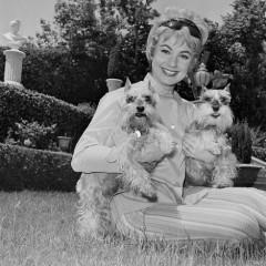 Shirley-Jones-dogs