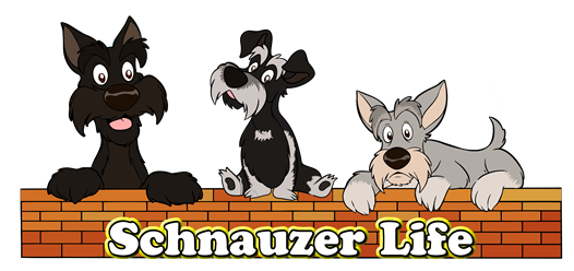 Schnauzer Life - Everything About Schnauzers